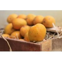 Mango - Alphonso (Chemical free, Naturally Ripened)