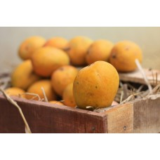 Mango - Alphonso (Chemical free, Naturally Ripened)