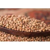 Cowpea (Alasande), 250 gms