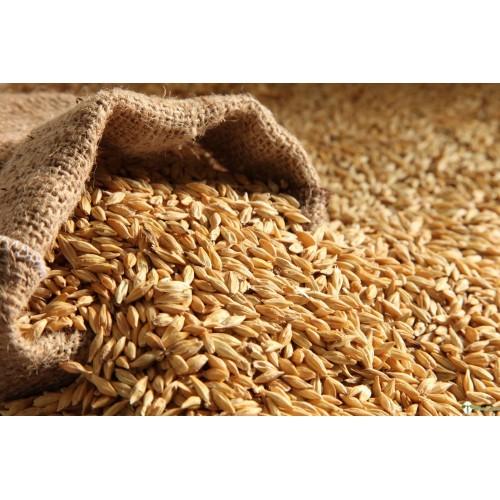Wheat - Jave Godhi (Long Wheat)