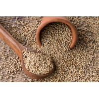 Pearl Millet - Sajje - Whole, 500 gms