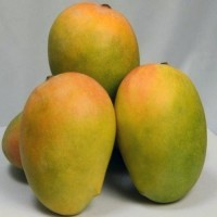 Mango - Kesar (Chemical free, Naturally Ripened)